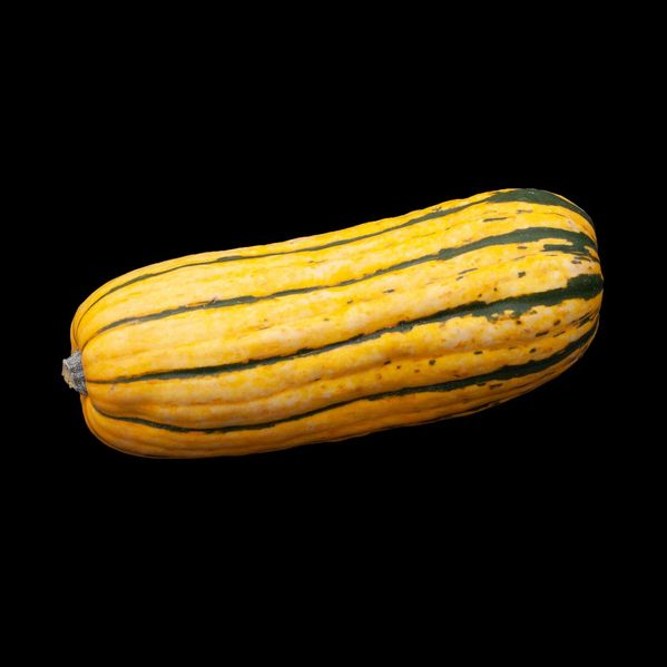 Delicata Squash narrow display