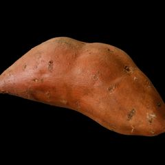 Sweet Potatoes /  Yams